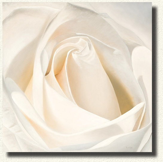 Candlelight, A portrait of a white rose