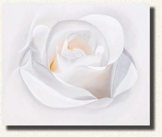 A white rose Portrait - Fade to White