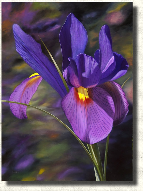 The amazing beauty of the Iris - an oil painting of an iris.